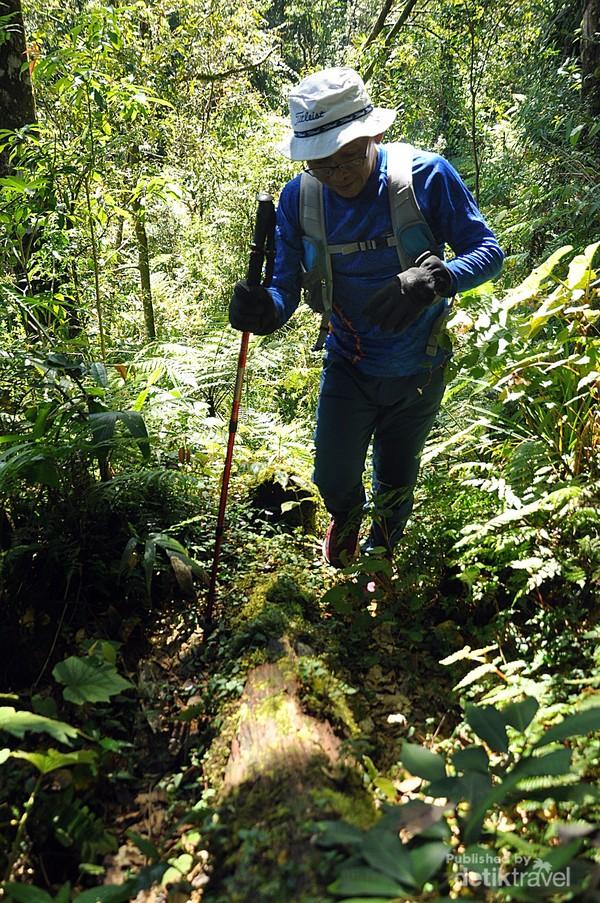 suasanan trek hutan puncak Halimun