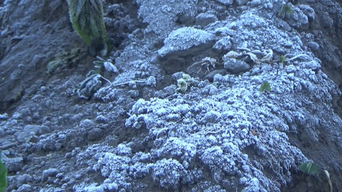 Embun Beku di Kaki Gunung Semeru