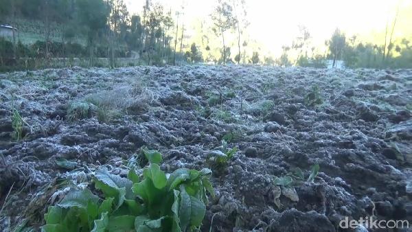 Peristiwa ini terjadi mulai dini hari hingga pagi hari sebelum matahari terbit, karena suhu dingin dikawasan gunung Semeru. Bunga es ini akan kembali mencair menjadi embun saat matahari terbit.
