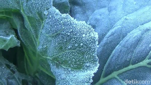 Tidak hanya di kawasan ranu pani, embun es juga terjadi di kawasan Ranu kumbolo dan Ranu regulo yang berada di kawasan gunung Semeru.