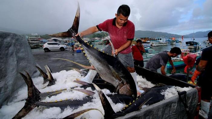 Ikan hasil nelayan.
