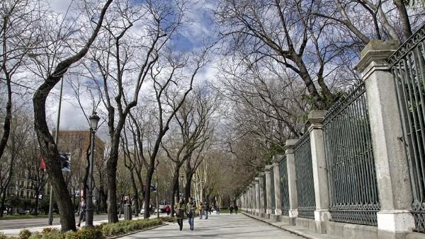 Selain Taman Retiro, jalan raya Paseo del Prado dengan deretan tanaman tua di tepi jalan kawasan Madrid juga masuk daftar itu. Kawasan itu merupakan salah satu tempat pertama di kota besar Eropa yang menjadi tempat warga menikmati waktu luang dan berjalan-jalan. Jimmyvillalta/Getty Images.