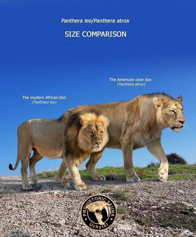 Perbandingan hewan prasejarah