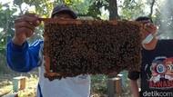 Penjualan Madu Meningkat, Peternak Lebah di Pasuruan Untung Berlipat