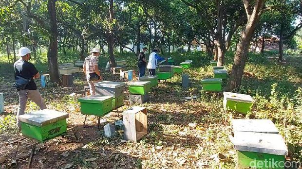 peternak lebah madu