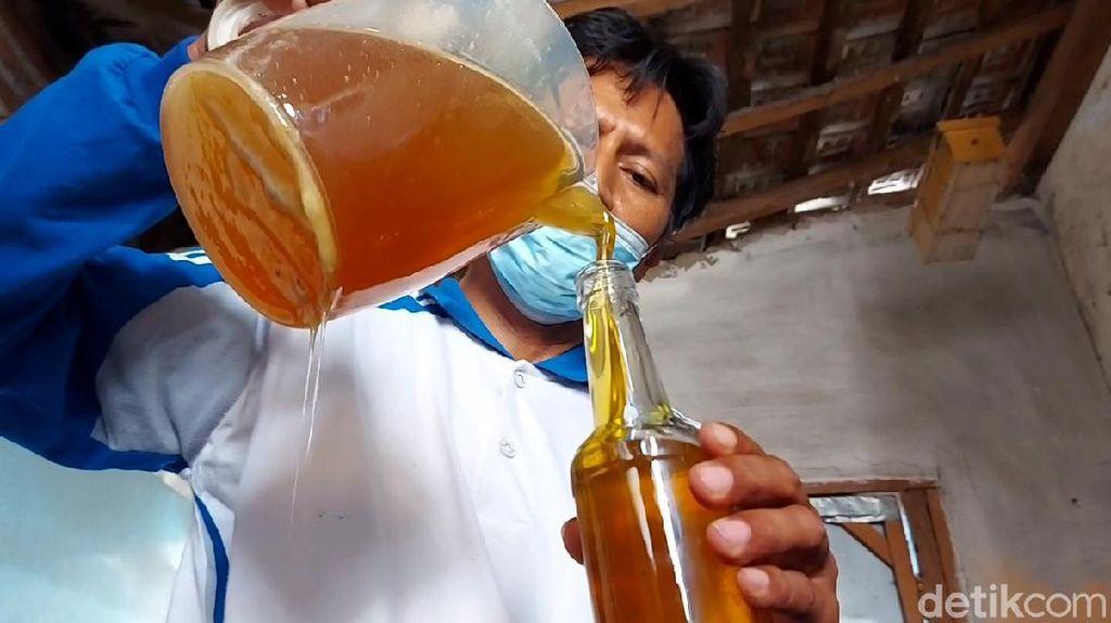 Semringah Peternak Lebah saat Madu Laris Manis di Masa Pandemi