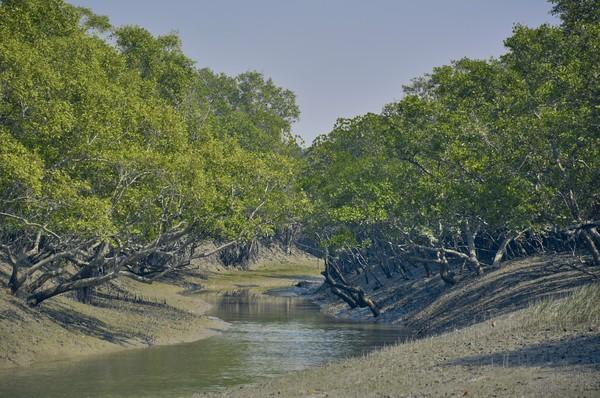 Berada di mara sungai Gangga, Taman Nasional ini masuk dalam daftar situs warisan dunia UNESCO. (Getty Images/iStockphoto)