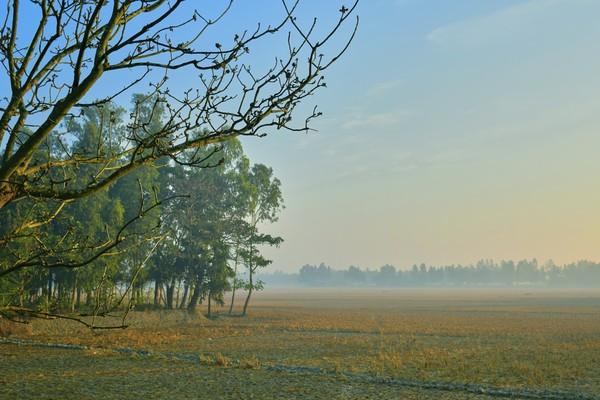 Kekayaan Sundarban menjadi penghidupan bagi hampir dari setengah juta orang yang hidup di dekat hutan mangrovenya.(Getty Images/iStockphoto)