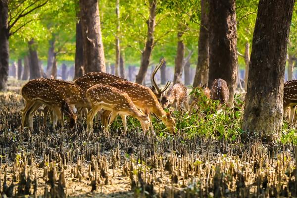 Dari data yang dimiliki oleh India, taman nasional ini memiliki 50 spesies mamalia, 315 jenis burung dan 59 jenis reptil.(Getty Images/iStockphoto)