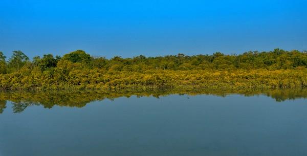 Selain memiliki kepentingan ekonomi, Taman Nasional Sundarban adalah penghalang badai, pengaman pantai perangkap sedimen dan sumber berbagai organisme akuatik, bentik dan darat.(Getty Images/iStockphoto)