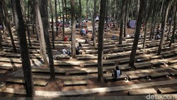 Kembali Buka, Hutan Pinus Sari Bantul Terapkan Ganjil Genap Besok