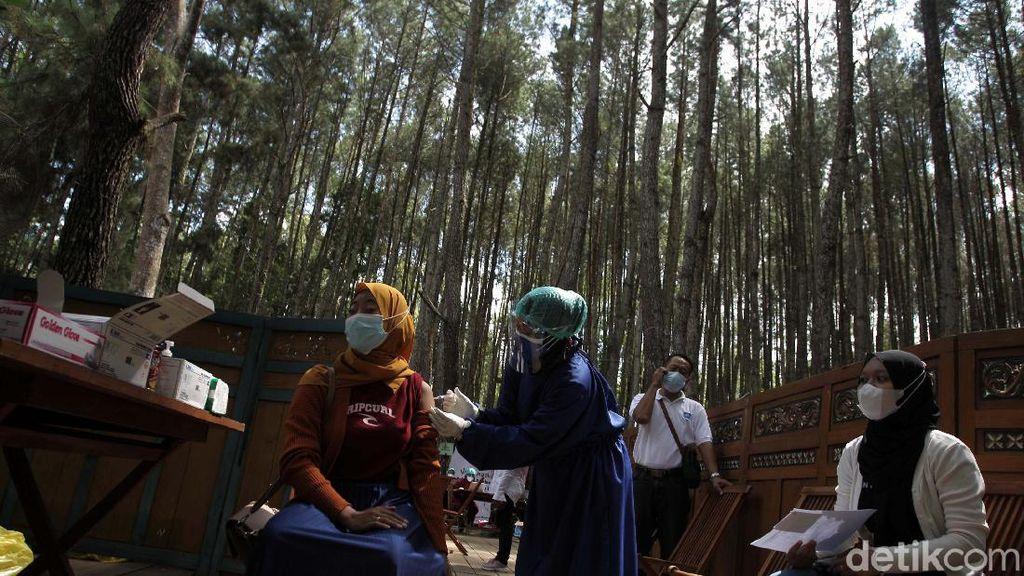 Bikin Sejuk, Suntik Vaksin di Hutan Pinus Bantul
