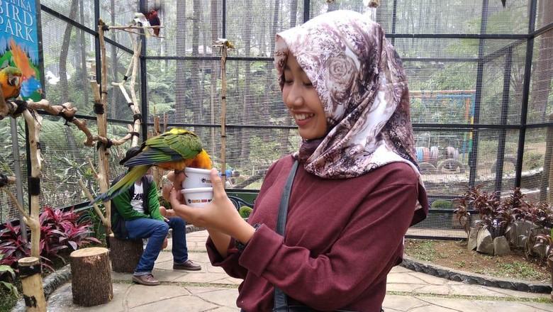 Burung macau TWGC Lembang