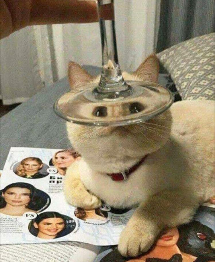Distorsi kaca pada hewan
