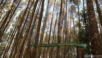 Kisah Sedih Pekerja Wisata di Balik Pesona Hutan Pinus Mangunan