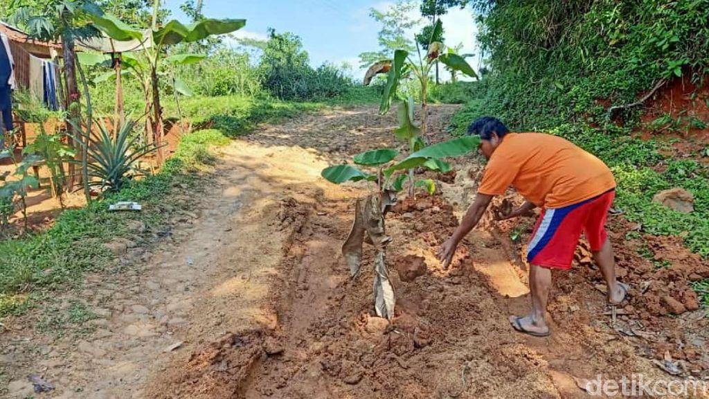 Warga Tanami Jalan Rusak Pohon Pisang, Ini Respons Bupati Cianjur