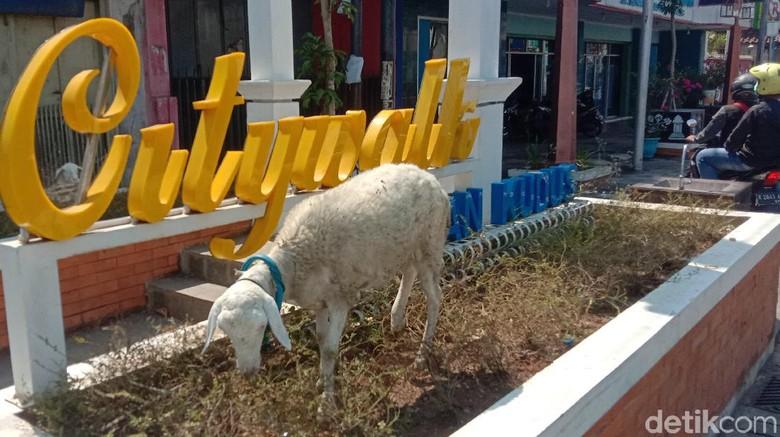 Kudus Citiwalk jadi tempat main kambing