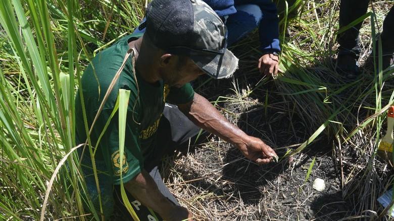 Penemuan cangkang laut oleh Badan Arkeologi Papua di Bukit Khulutiyauw