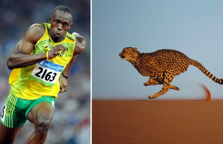hewan atletis
