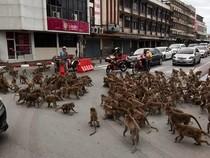 Aneh tapi Nyata, Jalanan di Thailand Macet karena Tawuran Dua Kelompok... Monyet