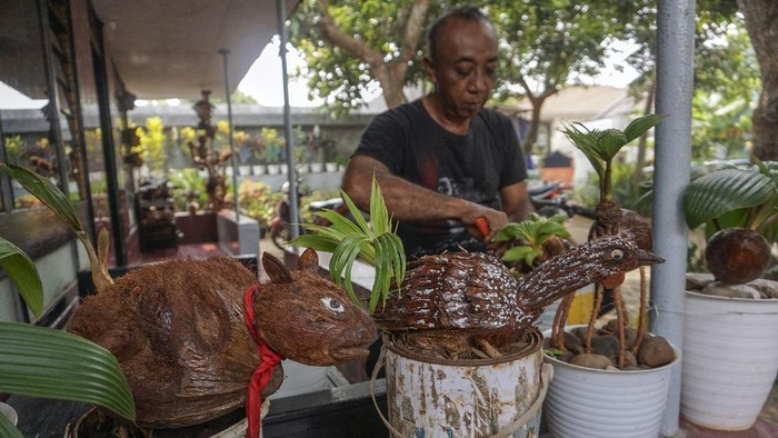 Warga mengerdilkan bibit pohon kelapa berkarakter hewan di Desa Kemiri Barat, Subah, Kabupaten Batang, Jawa Tengah, Sabtu (31/7/2021). Menurut warga itu, budi daya tanaman pohon kelapa yang dikerdilkan atau menggunakan teknik bonsai tersebut dapat ditingkatkan nilai jualnya dengan membentuk tempurung kelapanya menjadi sebuah karakter dan dijual dengan harga rata-rata Rp300 ribu per pohon. ANTARA FOTO/Harviyan Perdana Putra/wsj.