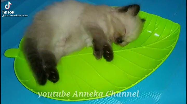 Kreatif! Netizen Bikin 'Nasi Kucing' yang Beda dengan di Angkringan