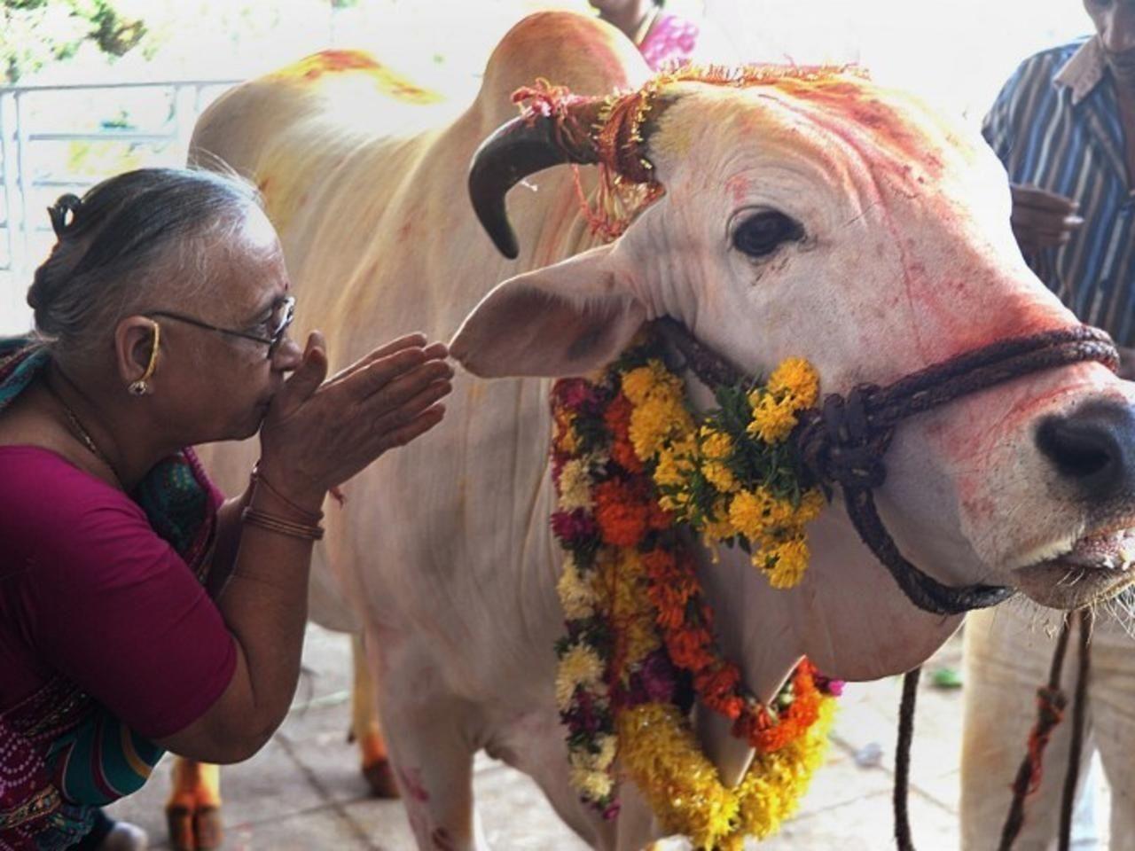 Umat Hindu Tak Konsumsi Daging Sapi, Ini Kisah di Baliknya