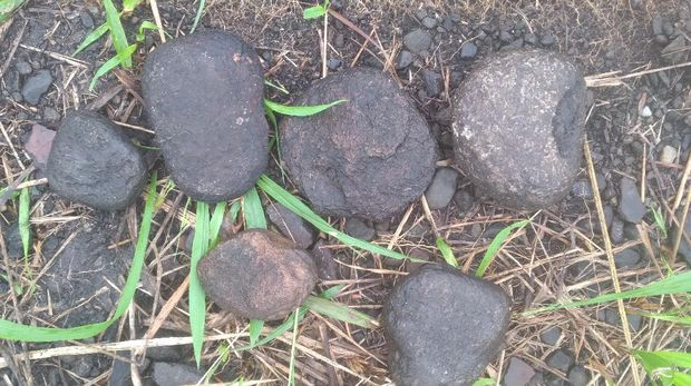 Batu digunakan untuk masak  ikan presto