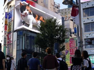 Ini Kucing Raksasa yang Bikin Salah Fokus di Tokyo