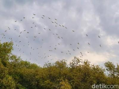 Negeri Burung dari Situbondo