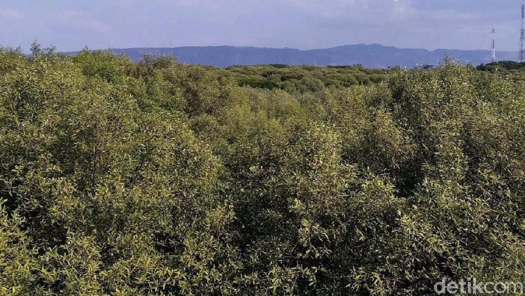 Apa Saja Fungsi Ekologi Hutan Mangrove? Ini Penjelasannya