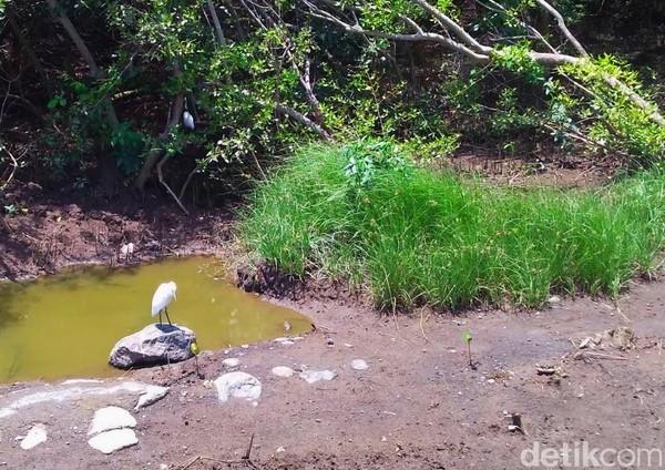 Di kawasan ini juga dihuni beragam jenis burung. Terbanyak burung blekok sawah (ardeola speciosa). Pun ada jenis yang masuk kategori dilindungi. Yakni burung Kuntul Kecil (egretta garzetta), Kuntul Kerbau (bubulcus ibis), serta Gajahan Pengala (numenius phaeopus).