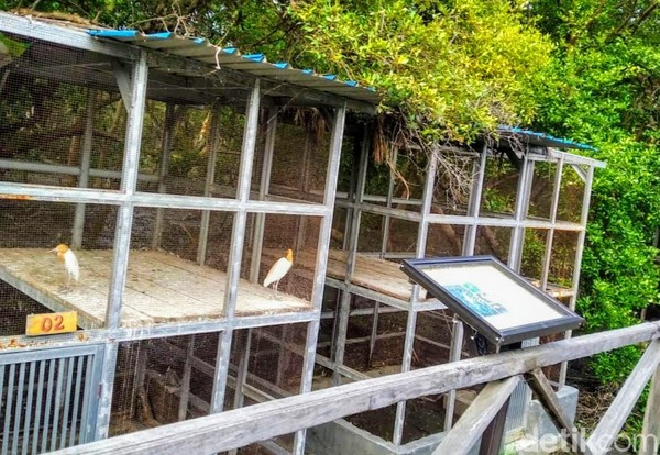 Pengamatan di lapangan, ada beberapa jenis mangrove tegakan di kawasan dengan luas total sekitar 27 hektar lebih ini. Terbanyak jenis rhizophora mucronata, rhizophora apiculata, dan avicennia marina. Pun sejumlah jenis lainnya, antara lain api-api dan sinjang.