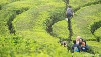 Foto: Kebun Teh Ciwidey Diserbu Warga yang Kebelet Liburan