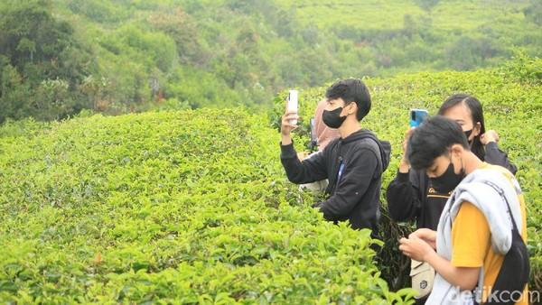 Pemandangan perkebunan teh di Ciwidey diakui wisatawan tidak kalah dengan pemandangan perkebunan teh di berbagai daerah. Mereka pun asyik berfoto di kebun teh ini. (Muhammad Iqbal/detikTravel)