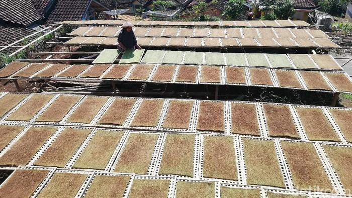 Petani Tembakau di sentra produksi bako di Kecamatan Sukasari, Kabupaten Sumedang sedang menjemur daun tembakau yang telah dicetak untuk siap dijadikan bako rokok.