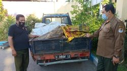 Polisi Amankan 14 Potong Kayu Sonokeling Hasil Pembalakan Liar di Pasuruan