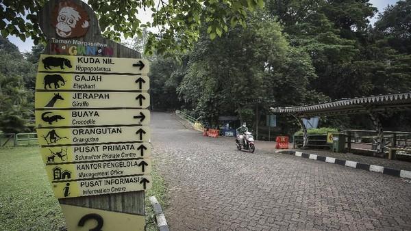 Pengelola Taman Margasatwa Ragunan mengoptimalkan wisata virtual bagi masyarakat melalui siaran langsung media sosial (Instagram) agar pengunjung tetap dapat menikmati wisata satwa selama PPKM.