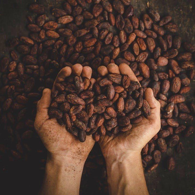 Bangga! Indonesia Punya 'Pemakan Cokelat' Bersetifikat Internasional