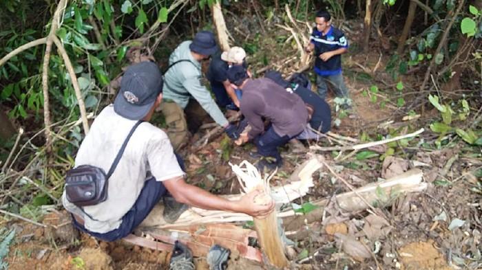 Evakuasi beruang madu di Indragiri Hulu (Dok istimewa)