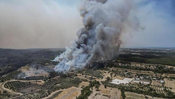 Beberapa hotel di resor laut Aegea Bodrum yang berdekatan dengan kebakaran hutan dievakuasi. (AP)