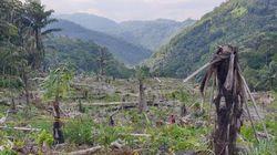 Pembalakan Liar 7 Ha Hutan Lindung, Anggota DPRD Soppeng Jadi Tersangka