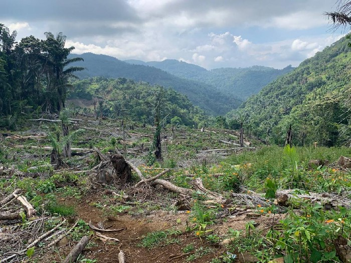 Oknum anggota DPRD Kabupaten Soppeng dari fraksi Gerindra berinisal A ditetapkan menjadi tersangka kasus pembalakan hutan lindung seluas 7 hektare (ha) (dok istimewa)