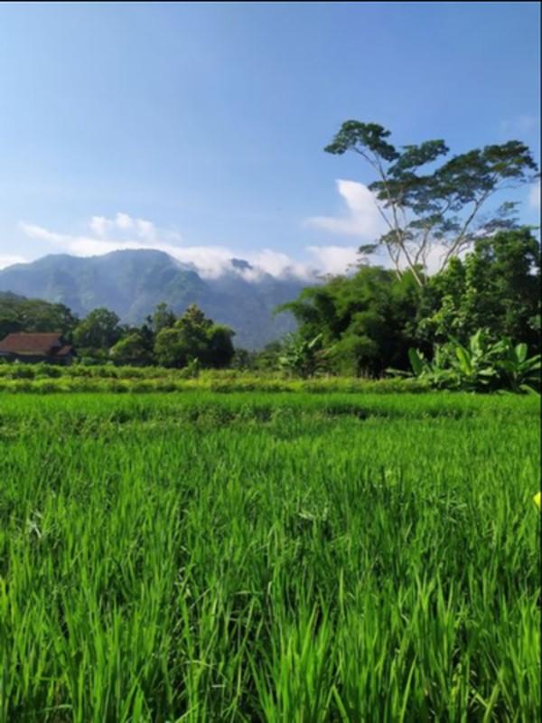Sejauh mata memandang di Dusun Klipoh, Magelang.