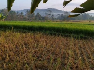 Pagi yang Syahdu Sekali di Dusun Klipoh, Magelang