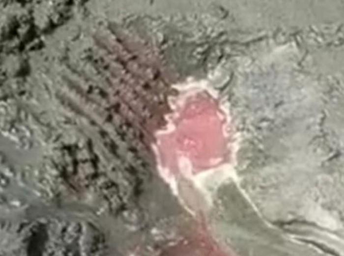 Sebuah video pasir pantai mengeluarkan darah viral di Banyuwangi. Cairan merah seperti darah segar keluar dari pasir diduga di Pantai Grajagan Banyuwangi.