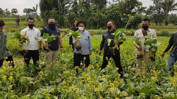 Ketua DPRD Sukabumi carikan solusi bagi petani sawi yang gagal panen
