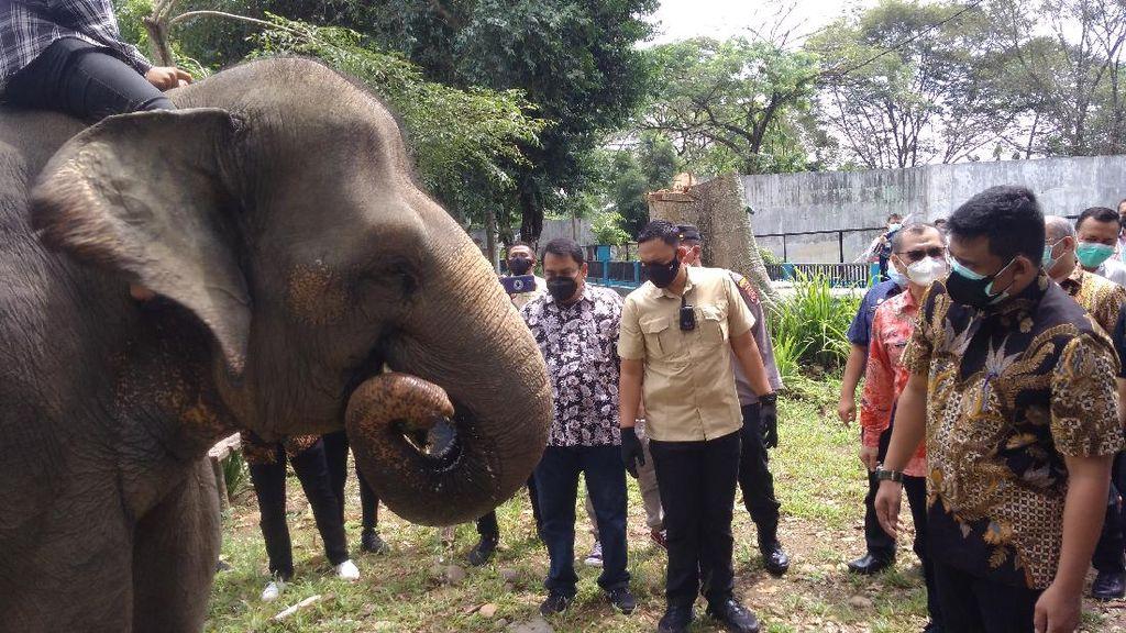 Bobby Siap Tarik Investor Kembangkan Kebun Binatang Medan