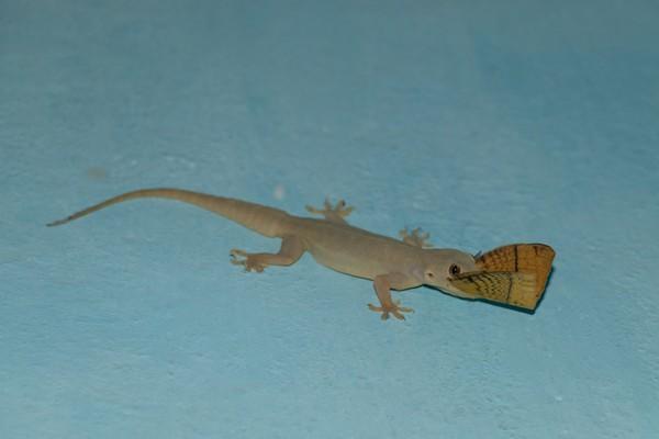 Cicak tidak punya kelopak, namun mereka punya sisik bening untuk melindungi mata mereka. (iStock)