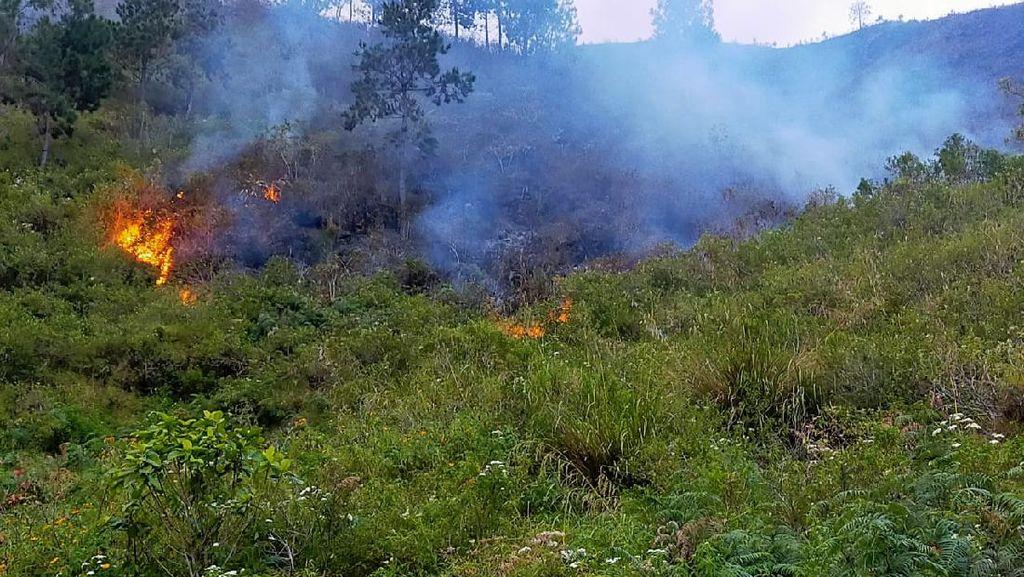 Polisi Tangkap Terduga Pelaku Pembakaran Hutan di Sekitar Danau Toba